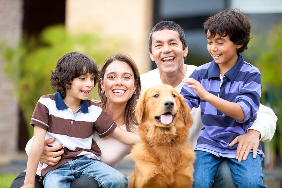 Estate Planning for Pets: What You Need to Know for Your Furry Friends